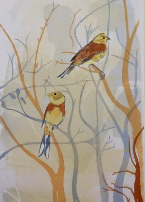 Our Yellowhammers